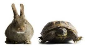 turtle hare